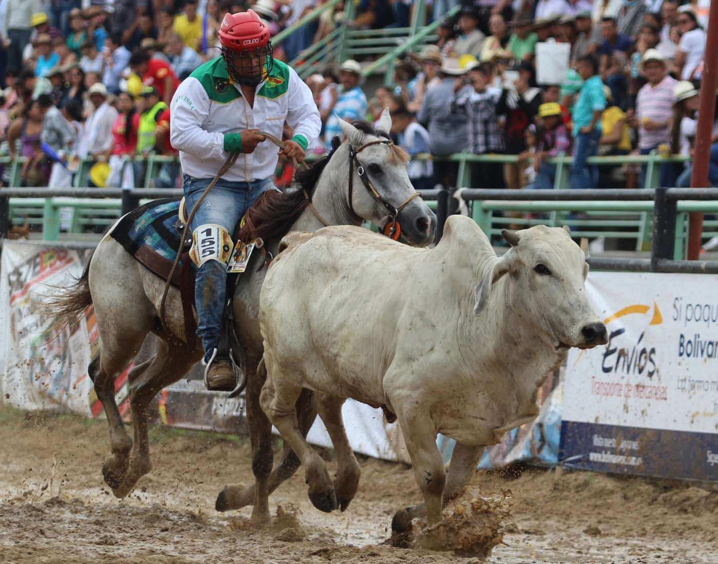 Coleo traditional sport of Venezuela