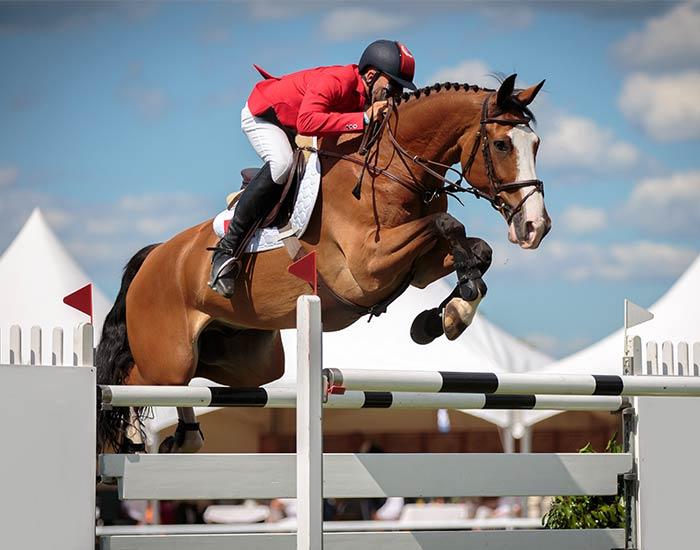 Eventing equestrian sport