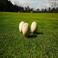 Polo - Ball