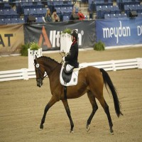 Para-Dressage - Saddle